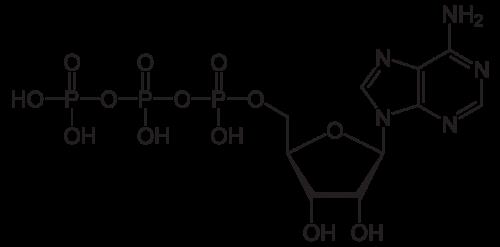 molecule d'ATP, adenosine triphosphate, le carburant musculaire de notre organisme
