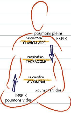 pranayama et apnée, la respiration complète