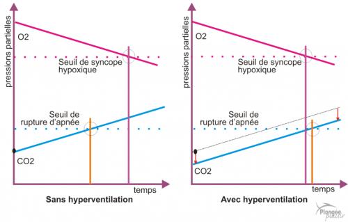 ventilation et hyperventilation chez l'apnéiste : risques de syncope