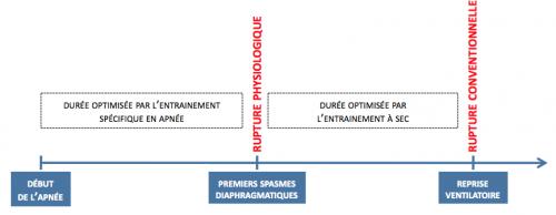 Point de rupture physiologique et conventionnel de l'apnée et rôle de l'entrainement sur l'allongement de la durée d'apnée