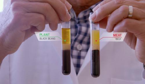 Analyse sanguine avec un repas à base de viande et un repas sans protéine animale