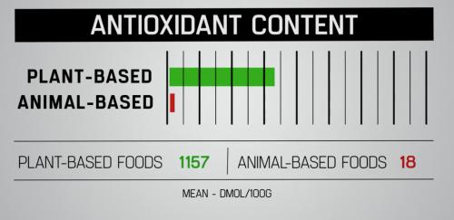 anti oxydant d'un régime alimentaire vegan améliorant la performance chez le sportif