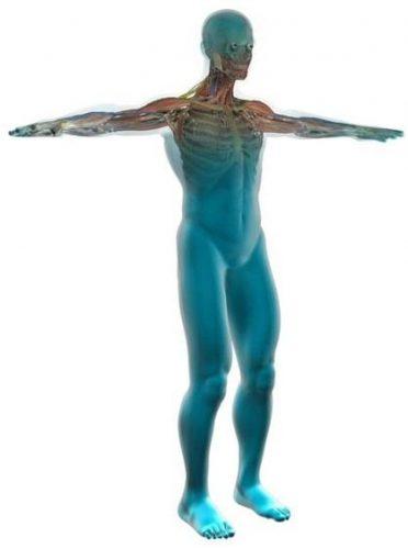 Composition d'eau dans le corps humain