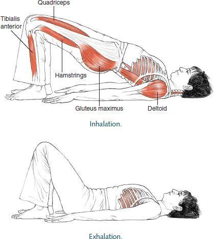 yoga: position du demi pont pour l'assouplissement du dos en monopalme