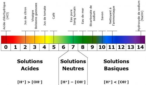 Echelle du pH, d'acide à neutre puis basique. ph et corps humaine, équilibre acido-basique