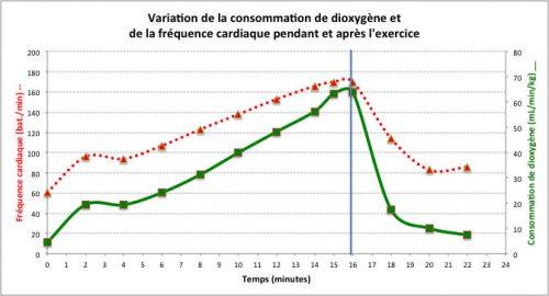 variation de la consommation de dioxygène et de la fréquence cardiaque avant et après l'exercice physique
