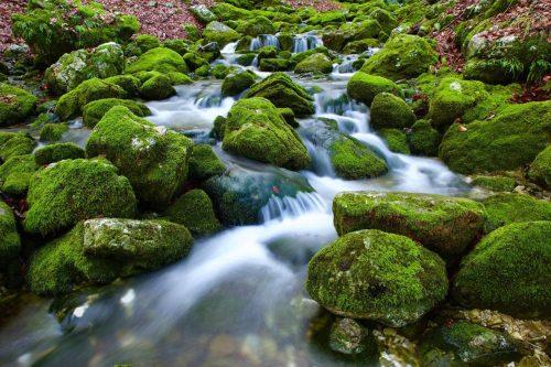 le chemin de l'au, à l'état naturel, harmonie