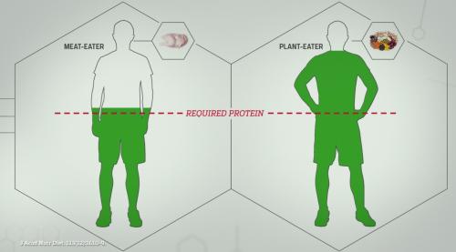 Niveau de protéines dans l'organisme d'un végétalien moyen et d'un carnivore.