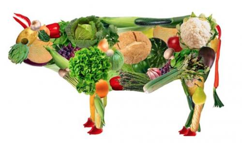 les protéines végétales et la performance sportive