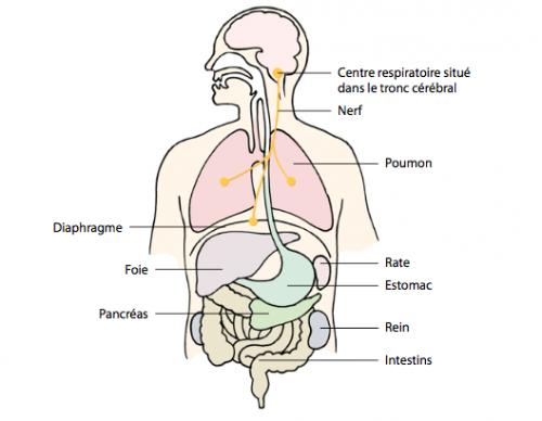 rate, retention poumons vides et globules rouges