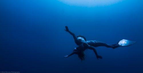 Réflexe d'immersion chez les mammifères terrestres et marins et adaptations physiologiques chez l'apnéiste