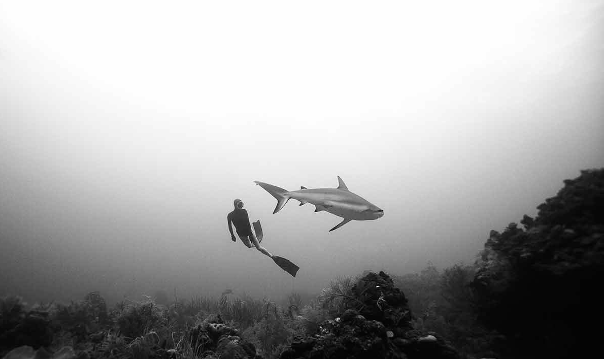 Un apnéiste et un requin christiana et eusebio saenz de santamaria, le régime alimentaire de l'apnéiste