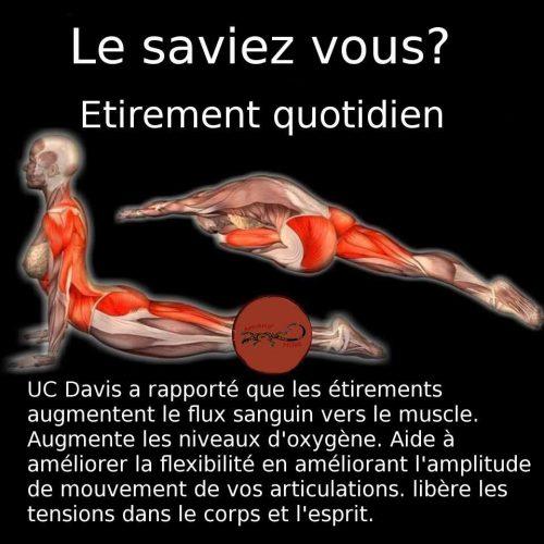 Souplesse dos et lombaires pour le mouvement ondulatoire en monopalme chez le plongeur apnéiste