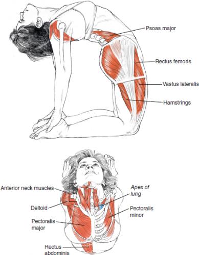 yoga, position du chameau pour l'assouplissement du dos dans la technique de la monopalme